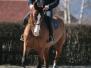 preparazione-cavalli